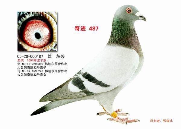 请把自己中意的 信鸽图片发上来看看好吗?