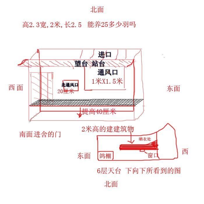 中国信鸽信息网;; 阳台 迷你 鸽舍    鸽舍 设计; 赛鸽棚设计图片