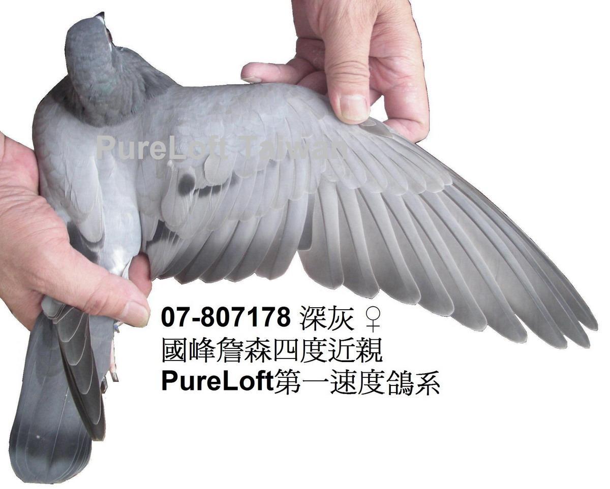 动物鸽苍蝇鸟猫咪1200_963鸟类把鸽子吃了图片