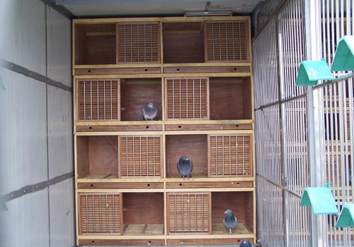 种鸽隔离棚设计图