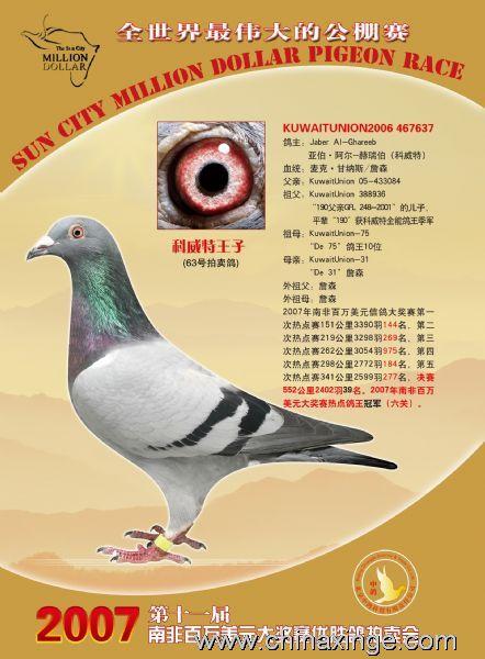 鸟类鸽庄园鸟动物442_600竖版竖屏鸽子后果被偷吃蚂蚁图片