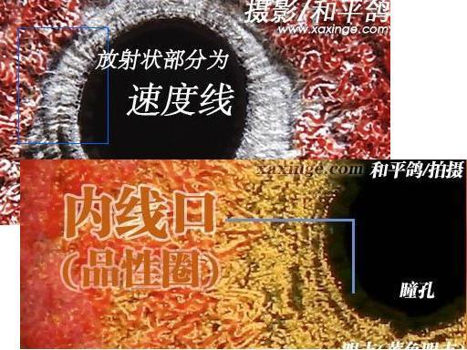 信鸽内线口和眼志的区分