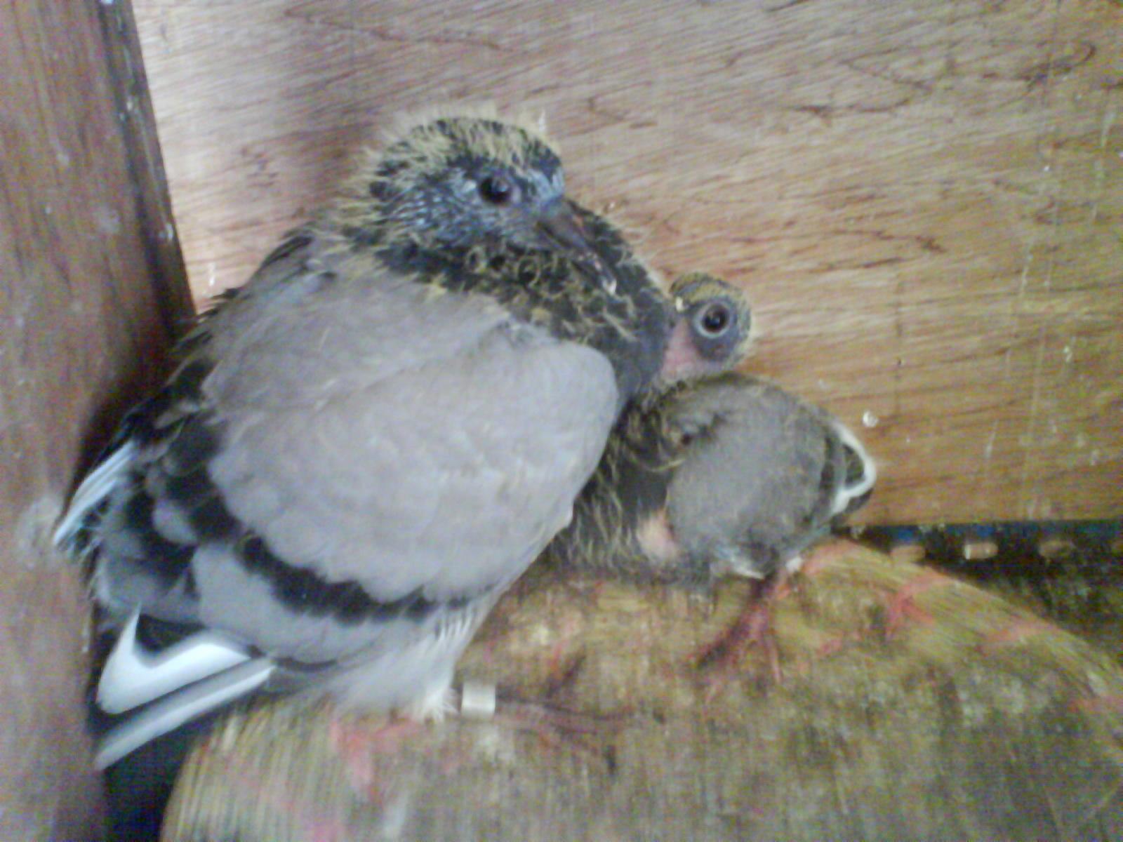 鸽子鸽蚊子鸟树林1600_1200梦到动物很多鸟类图片