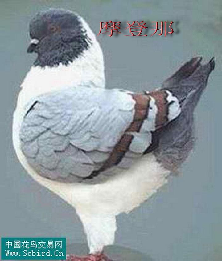 白羽 国模_白羽 人体人体女模特白羽 国模人体私摄白羽 图片