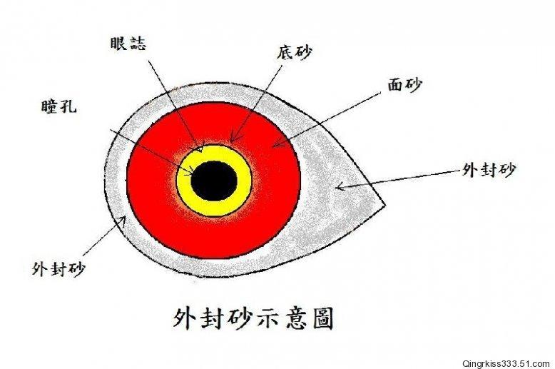 信鸽眼志十个级别图