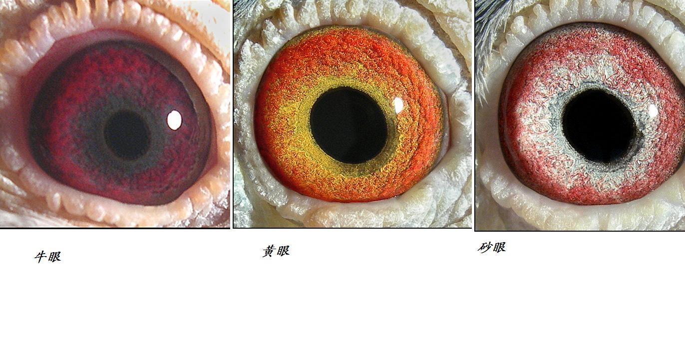 眼睛绘画方法:[1]初学者如何绘画眼睛,相信很多初学者再绘画过程中会
