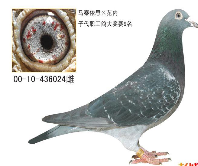 名家谈 信鸽的眼睛 的决定