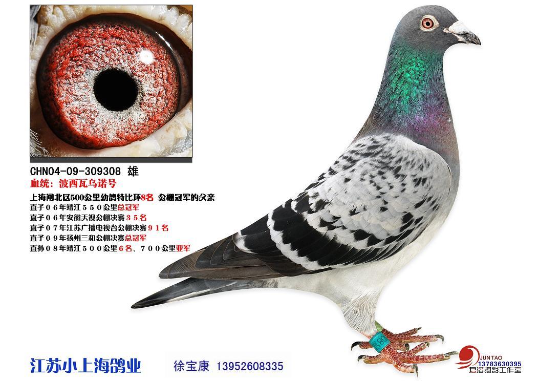 新手养殖鸽子-我刚开始 养鸽子 不知道给什么药吃图片