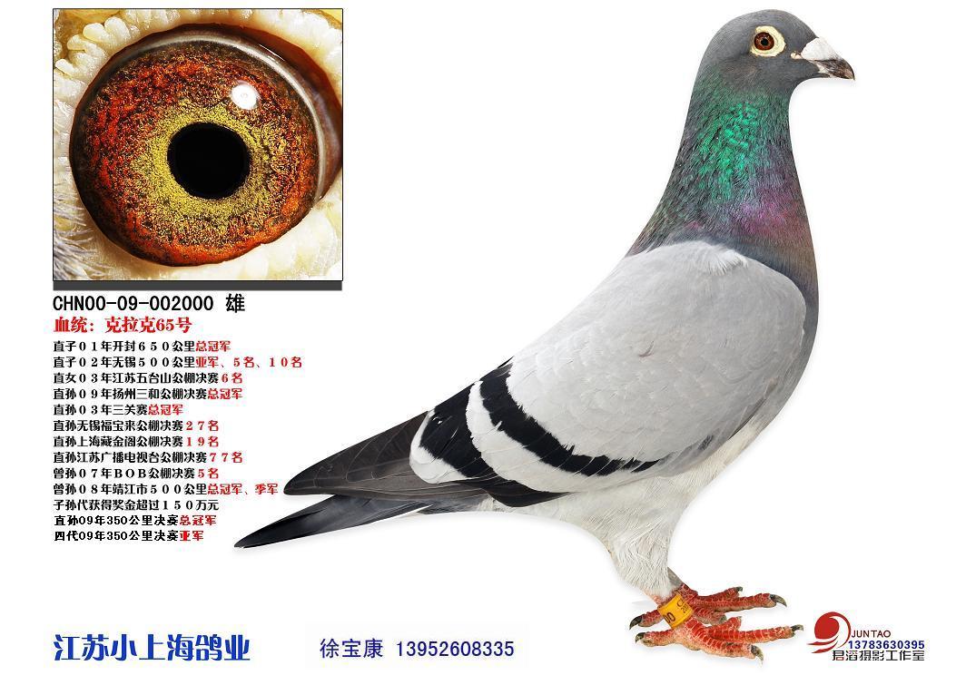 鸽子的眼砂能说明它是一羽好的赛鸽或一羽好的种鸽吗