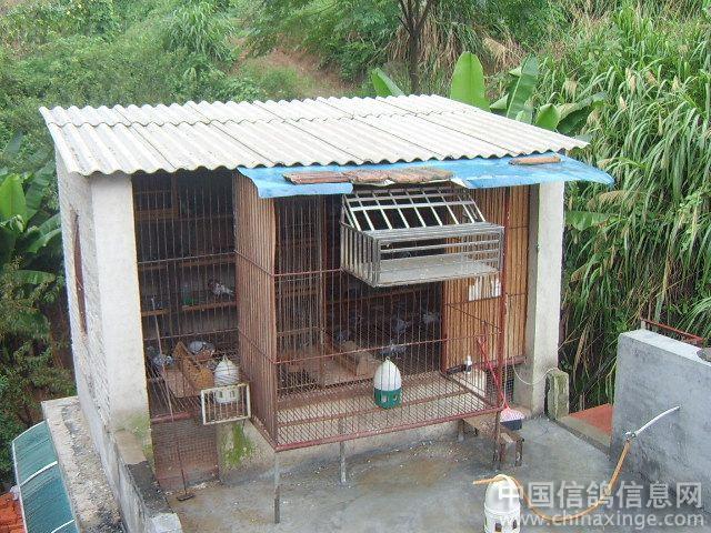 我需要一张搭建鸽棚 长3米宽2米高2.5米 的图子 我家有一面墙图片
