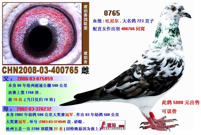 鸽子进笼口结构图片