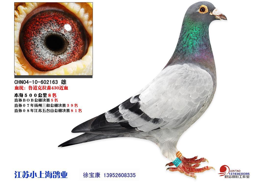 师们,你们挑选种鸽时,对种鸽的眼砂有什么要求呢 请谈谈你的理由.