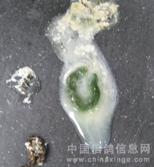 病鸽子的粪便有图,各位老师帮看看是哪的问题.图片