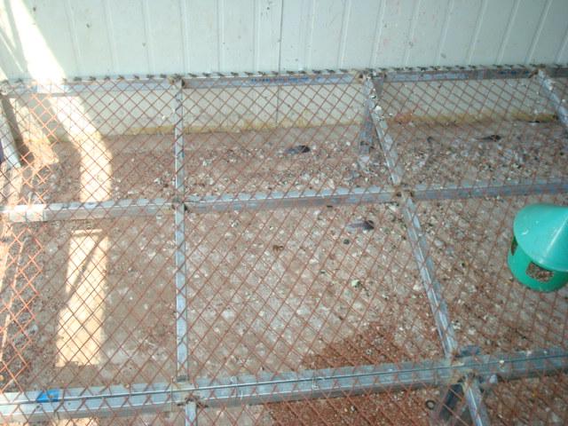 鸽子窝设计尺寸图片
