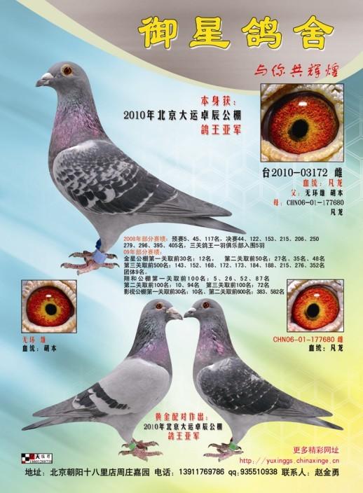 鸽子眼睛结构图片解释