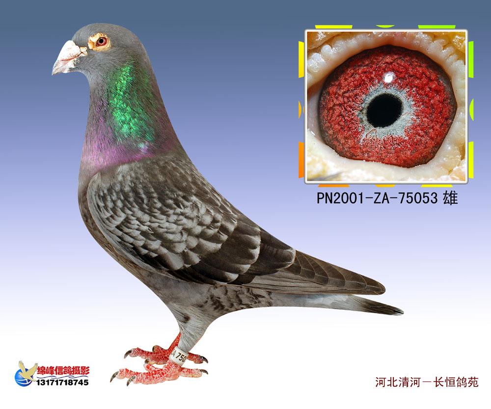 鸽眼解剖结构图