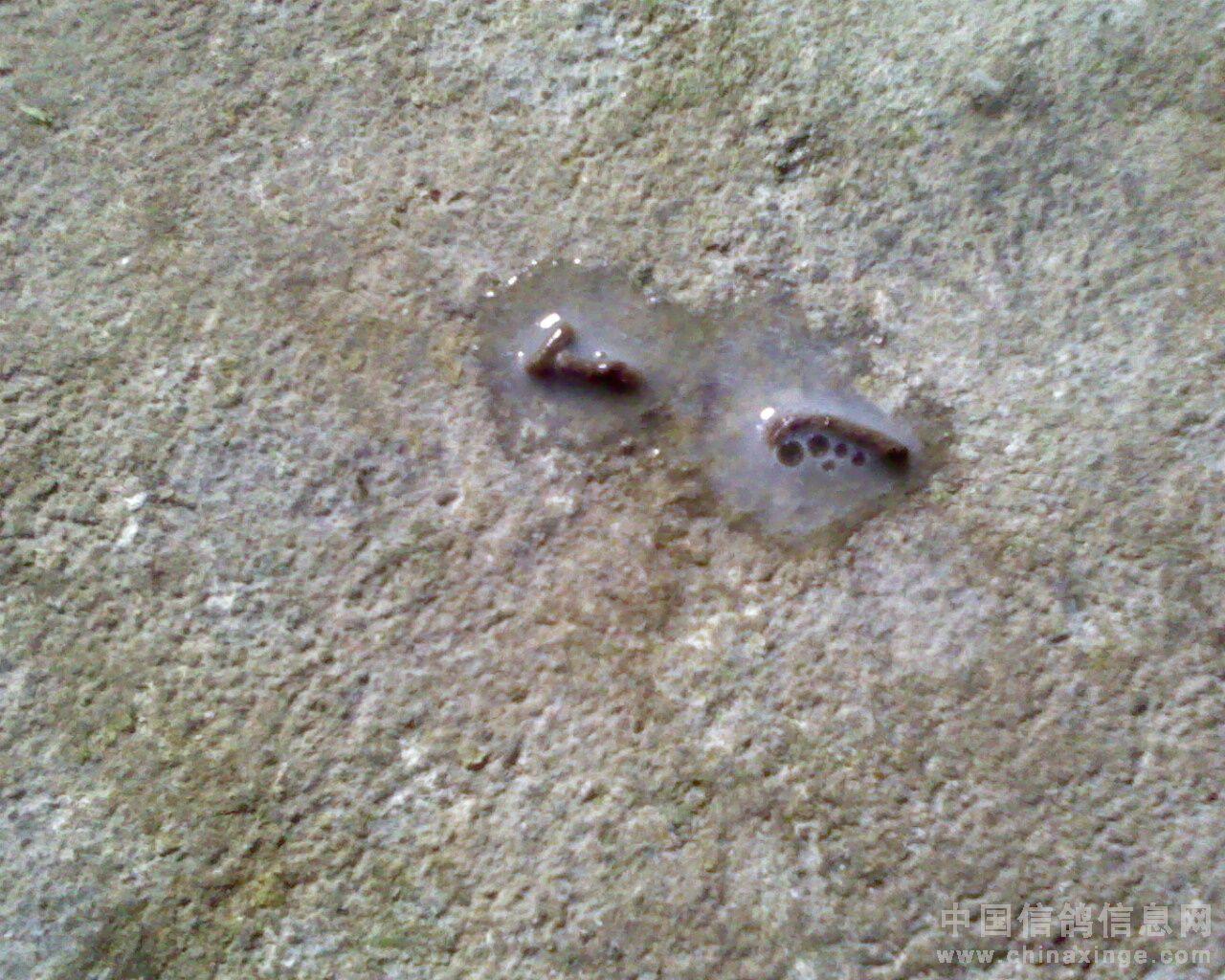 粪球虫图片大全 粪球虫摄影图 昆虫 生物世界图片