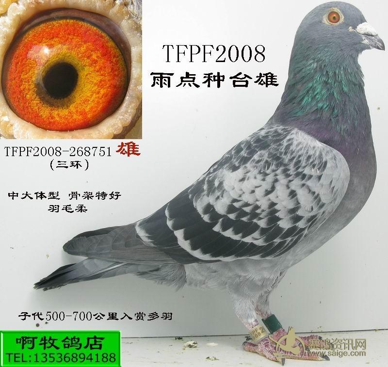 搜鸽天下一查信鸽脚环1220200