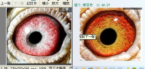 这两只眼睛配起来可以吗?合适吗?