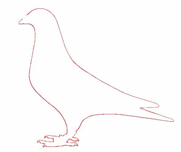 信鸽照片处理教学:1994982625